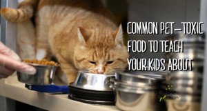 Common Pet-Toxic Food to Teach Your Kids About