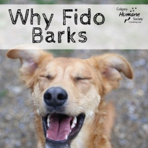 why fido barks