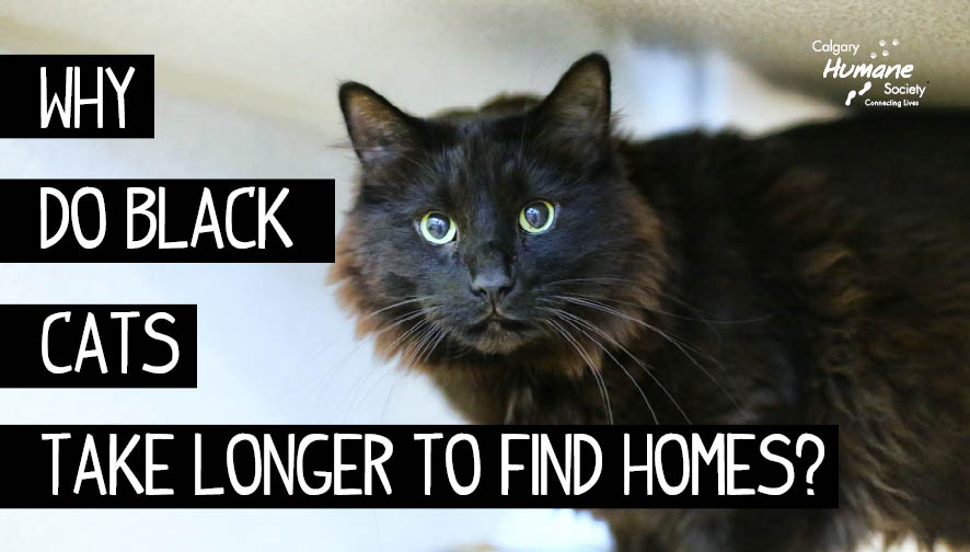 black cat home