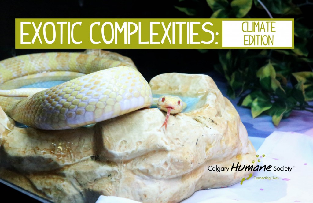 Exotic complexities climate-300