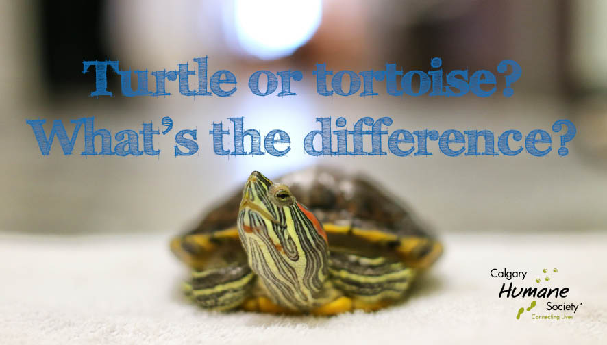 Turtle or tortoise - w