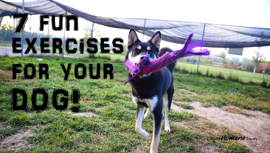 7 fun exercises for your dog_W