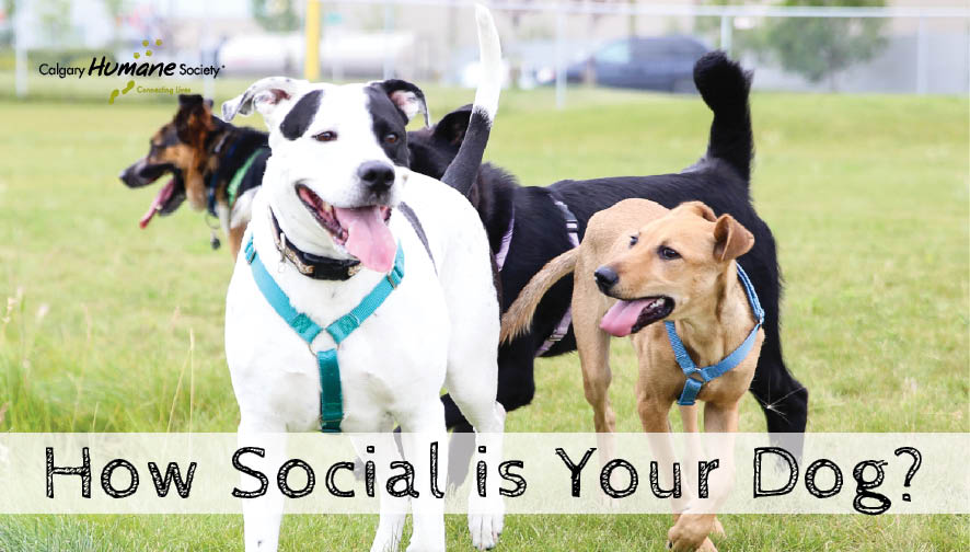 How social is your dog 2