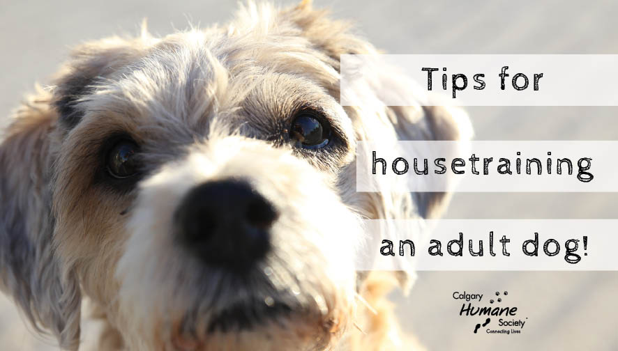 Tips for Housetraining