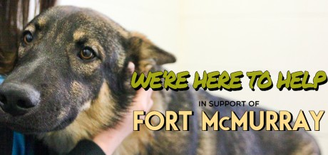 Ft Mac Support Banner image2