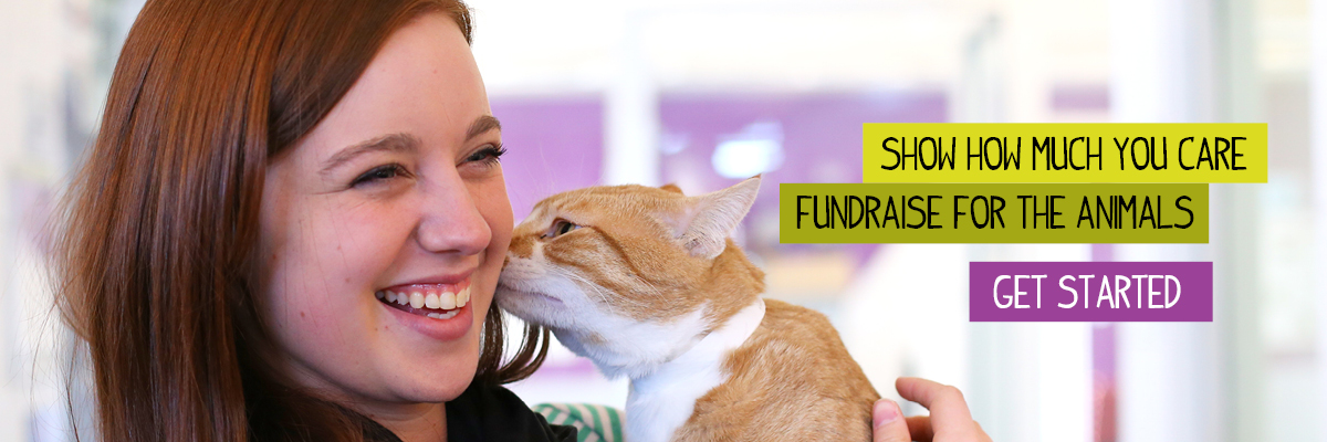 fundraise-for-the-animals-banner