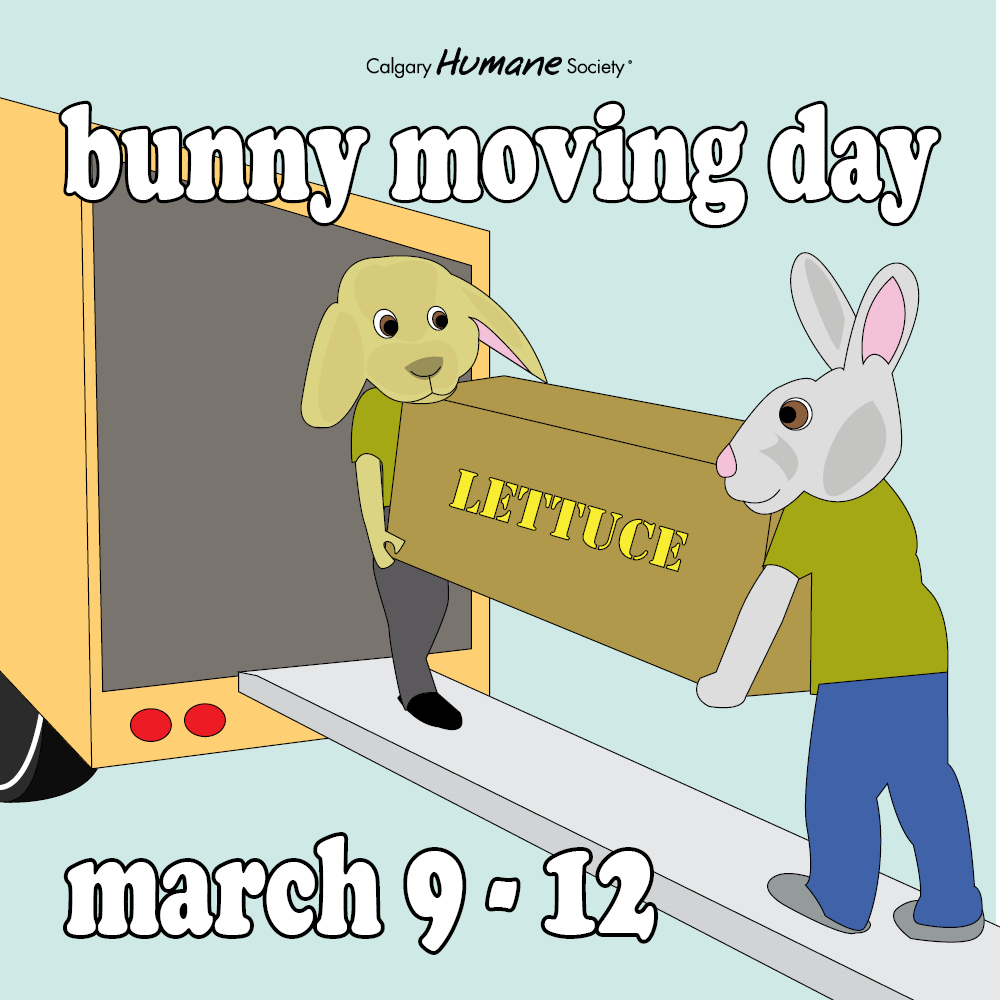 bunny-moving-day-sm-image