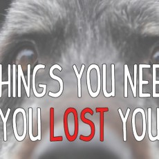 lost-pet-blog-banner