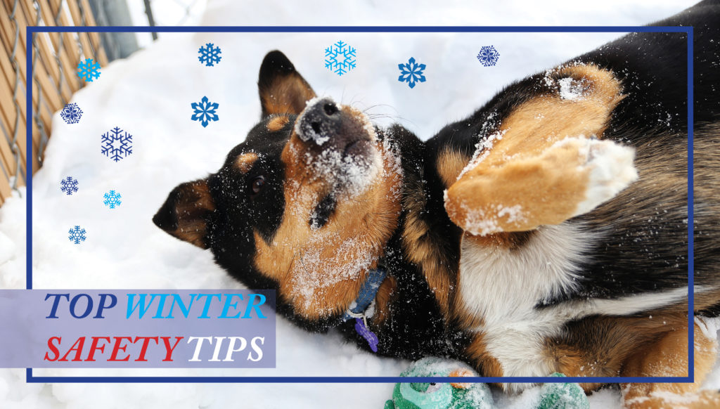 Top Cold Weather Safety Tips! - Calgary Humane Society
