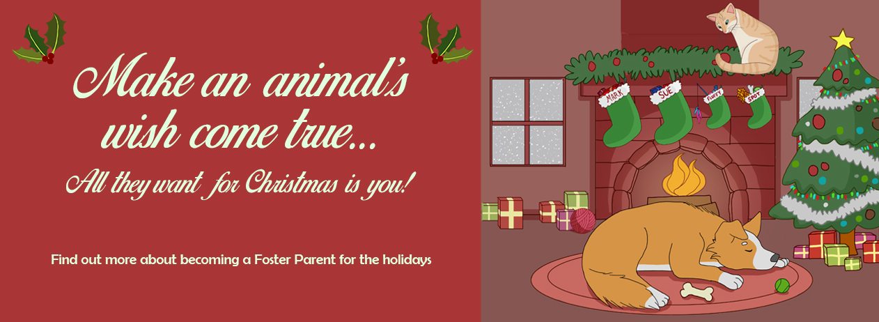 Make an animal's wish come true...all they want for Christmas is you!